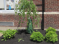 Lindbergh 'Green Team' Helps Beautify School Grounds